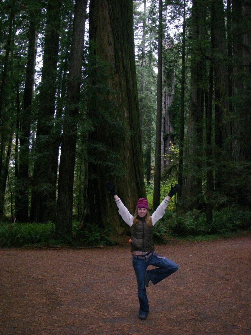 tree within the redwood trees