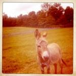 a soon to be papa donkey...